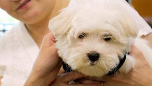 Hasta köpeğine bakacağı için 14 gün işe gidemez raporu tartışma yarattı