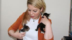 Makam odasında yaralı hayvanlara bakan müdürü şikayet ettiler Görev yeri değiştirildi, maaşı kesildi