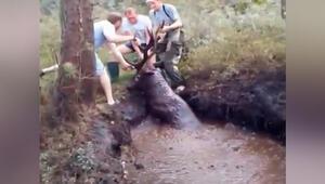 Bataklıkta mahsur kalan geyiği avcılar kurtardı