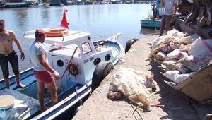 Denizden tavuk ölüsü topladılar