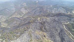 İzmirde yanan orman alanı Şubata kadar ağaçlandırılacak İlk fidan 11 Kasımda dikilecek