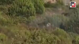 Pendikteki orman yangınını çıkardığı iddia edilen kişi kamerada
