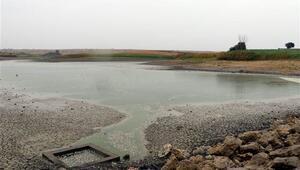 Sağanak, göletteki balıklara can suyu oldu