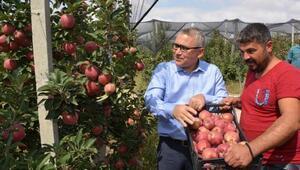 Vali Şimşek Borda elma hasadı yapan işçilerle buluştu