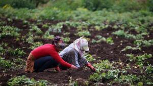 FAOdan Türkiyedeki tarım uygulamalarına övgü