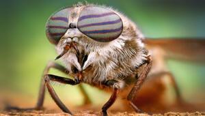 Sivrisineklerin genleri değişirse üremeleri durdurulabilir mi