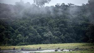 ABden Amazon ormanları uyarısı