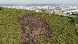 Aydos Ormanında kundaklama sonucunda yanan ormanlık alandaki tahribat havadan görüntülendi