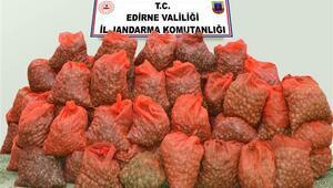 Keşan'da 1 ton 350 kilo kaçak midye ele geçirildi