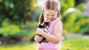 Kediler güven bağı kuruyor