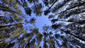 Hükümlülerin ağaçlandırmada çalıştırılması protokolü