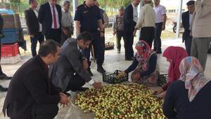 Demircide 4 yıl önce dağıtılan hünnap fidanları meyve vermeye başladı
