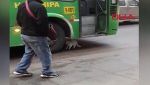 Otobüsün altına yatan kedi yürekleri ağza getirdi
