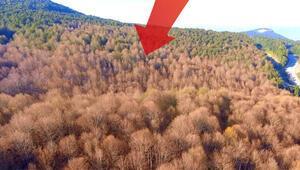 Yer Bursa... Orman bu hale geldi Kimse engelleyemiyor...