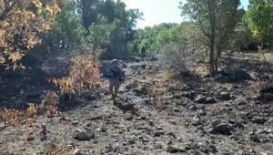 Siirt kırsalında terör örgütü PKKya ağır darbe