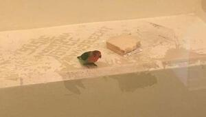Tanık sıfatıyla papağana gözaltı