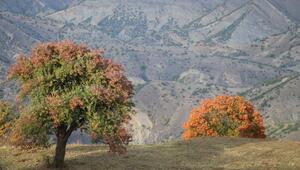 Sonbaharda renk cümbüşü Görenleri hayran bırakıyor