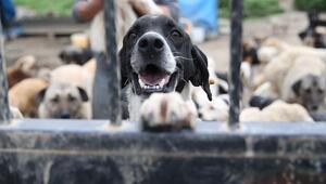 Hayvanları koruma günü ne zaman Hayvan hakları nelerdir