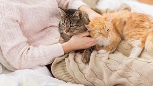 Evcil Hayvana Sahip Olmanın 7 Faydası