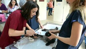 5.8lik depremin ardından yılda 50 bin hayvanın tedavi edildiği hastane de kapatıldı