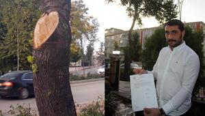 İş yerinin önündeki ağaçları kesti... 50 bin TL ceza yedi