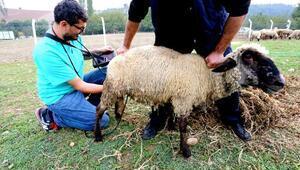 Yenişehirde hayvan yetiştiricilerine gebelik testi uyarısı