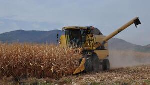 İslahiye ve Nurdağında mısır hasadı başladı