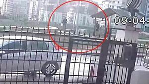 Sokak köpeklerinin zehirlenme anı güvenlik kamerasında