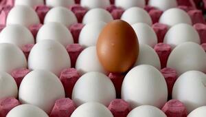 Ağustosta 1.6 milyar adet tavuk yumurtası üretildi