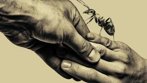 Karıncanın prömiyeri Boğaziçi Film Festivalinde