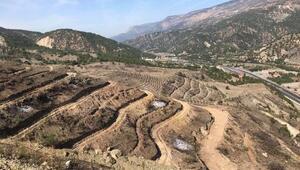 Yanan ormanlık alana 35 bin fidan dikilecek