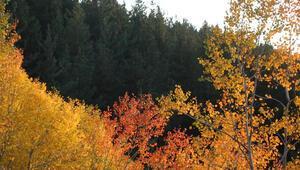 Oltu'da rengarenk doğa hayran bırakıyor