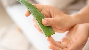 Yaraları iyileştiriyor Aloe vera cilt tedavisinde nasıl kullanılır