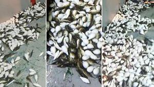 Ağına yüzlerce balon balığı takılan balıkçı konuştu