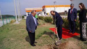 Türkiye-Japonya dostluğu, ıhlamur fidanı ile ölümsüzleşti