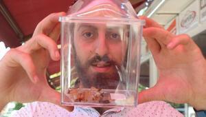 Et yiyen örümceği, cam fanusta besliyor