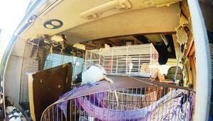 320 fareyle araçta yaşıyor