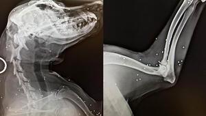 Bahçesine giren köpeği tüfekle vurdu, röntgen filmi şok etti