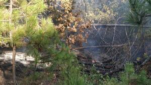 Orhaneli'nde orman yangını