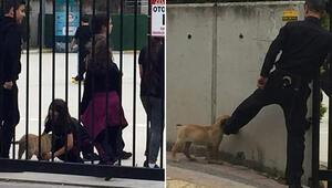 Ayağıyla uzaklaştırmaya çalıştığı köpeği, çocuklar isteyince okula aldı