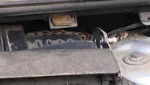 Araba satın aldı, içinden yılan çıktı Eski sahibi yılanı geri istedi