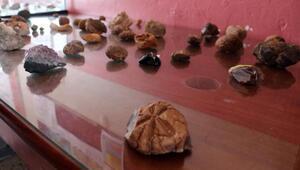 Bulduğu taşlar fosil çıkan öğretmen, okulda müze kurdu