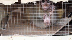 Sınır kapısında ele geçirilmişlerdi Hayvanat bahçesine gönderildiler