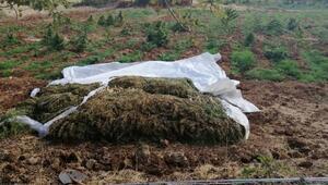 Licede narko-terör operasyonu; 4,5 ton esrar ve 185 bin kök Hint keneviri ele geçirildi