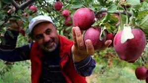 Vandan Kuzey Iraka en güzel elma ihracatı