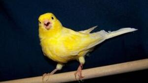Rus ötücü kuşlarından müzik ziyafeti