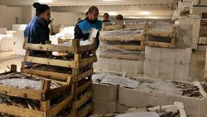 Boy yasağına uymayan 8,5 ton balığa el koyuldu