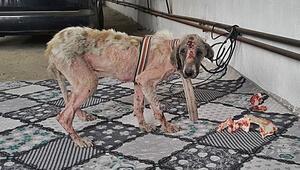 İnsanlık dışı olayda yeni gelişme O köpek bulundu...