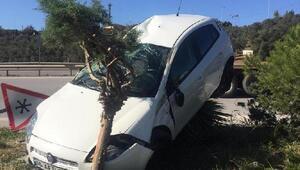 Kaza yapan otomobil ağacın üstüne çıktı