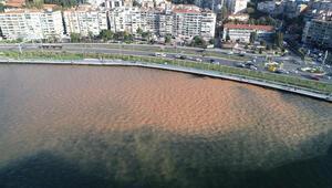 Kahverengine dönen İzmir Körfezi, eski rengine kavuştu